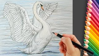 How to Draw a Swan Step by Step Easy