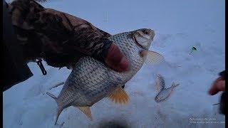 РАДИ ТАКИХ КАБАНЧИКОВ Я И ЕЗЖУ НА ОБЬ Рыбалка 2020 безмотылка крупная плотва