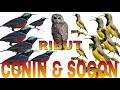 Suara Ribut Sogok Ontong Dan Conin  Mp3 - Mp4 Download