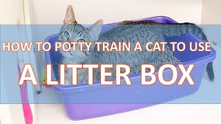 How To Potty Train A Cat To Use A Litter Box - Traning Pet Easy
