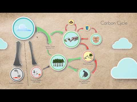 The Forestry Carbon Cycle