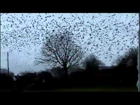 Lots of birds over the back garden
