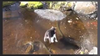Троллинг кота - рыба подо льдом |  Trolling cat - fish under the ice