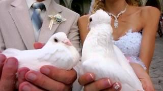 Свадьба, видеосъёмка, видеооператор, Бахчисарай, Симферополь