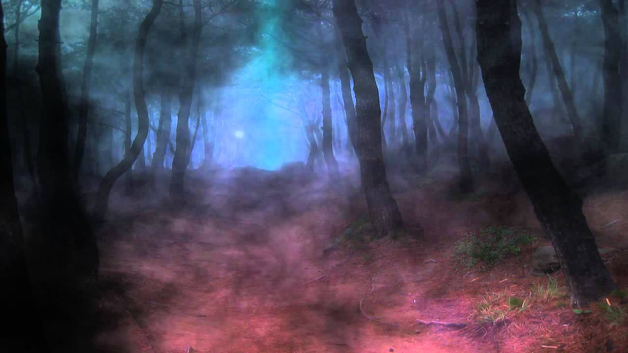Enchanted Forest #6886797