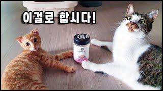 마미스프 고양이 수제동결건조간식을 먹어보았습니다. Th…