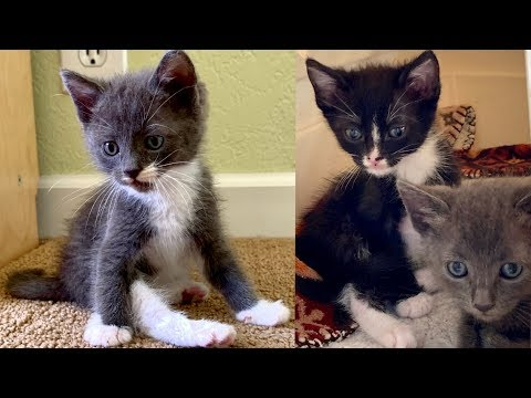 Three Kittens Just Rescued!