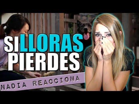 Nadia Reacciona: SI LLORAS PIERDES (Historia de un perro) │ Nadia Calá