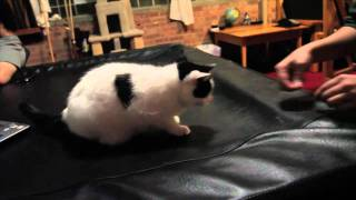 Studio :: Peep cat at Electrical Audio Studios