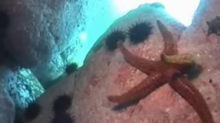 охота морской звезды