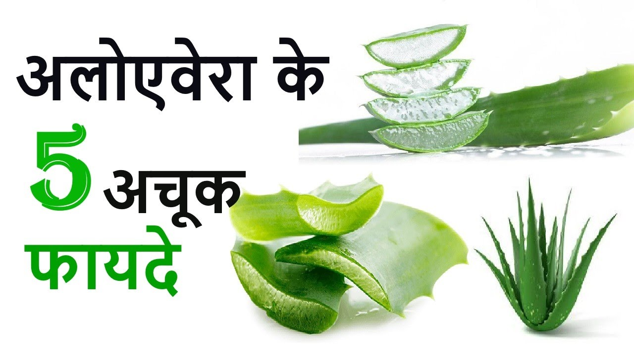 the medicinal and health benefits of aloe vera Aloe vera can be used to 9 healthy benefits of drinking aloe vera be sure to consult your doctor if you plan to use aloe vera in a medicinal.
