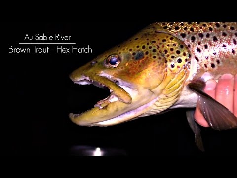 Hex Hatch for Brown Trout on the Au Sable River