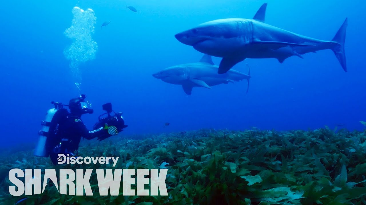 Rare Shark Brothers Spotted in Australia | Shark Week