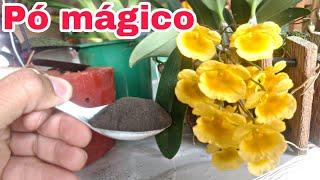 Pó mágico que faz qualquer orquídea florir