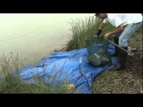 May 2012 - Blues, Shovelhead, Catfish