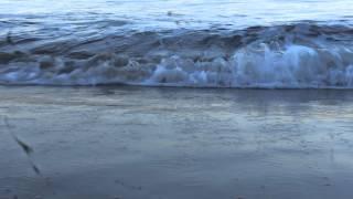 هجوم موجة ظريفة من البحر الأبيض المتوسط.. قرية الصيادين (الدالية)