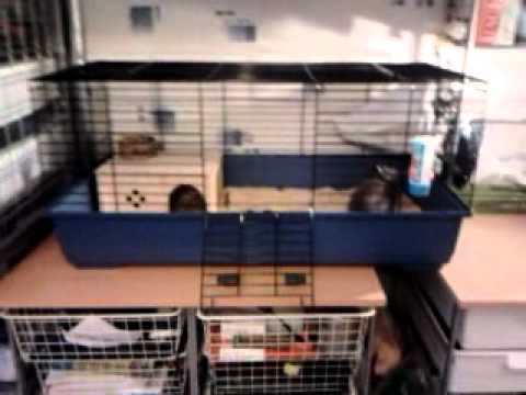 Mon lapin extra nain dans sa nouvelle cage youtube - Amenager une cage d escalier ...