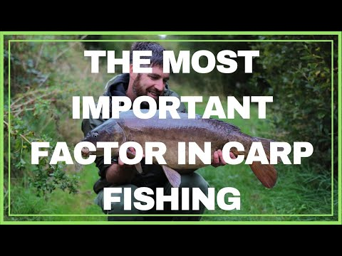 CARP FISHING ~ Spot Choices (catch More Fish!)