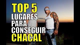 TOP 5 LUGARES PARA CONSEGUIR CHACAL