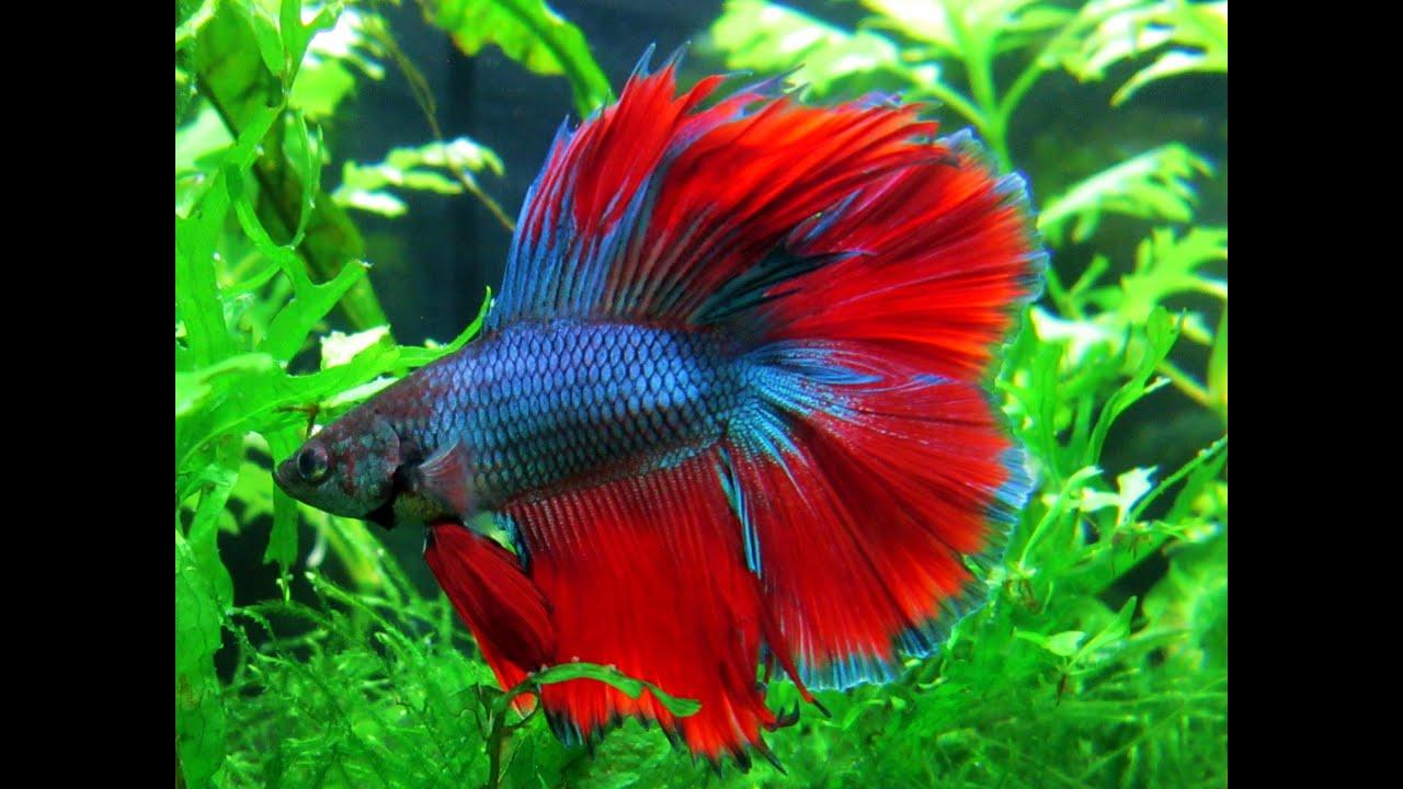 Unique Betta Fish |