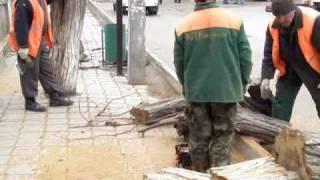 Санитарная вырубка деревьев в Судаке.wmv(, 2010-03-17T10:58:24.000Z)