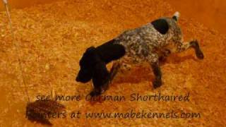 Mabe Kennels : Queeny & Black Jack 2009 : Male 5