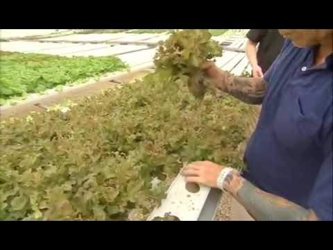 3 Boys Farm, Award winning Organic & Hydroponic Vegetable Growers