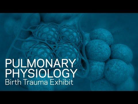 Pulmonary Physiology - Birth Trauma Animation