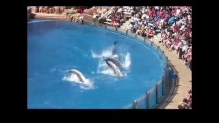 The Complete 20  Dolphin Discovery  Show at SeaWorld 16