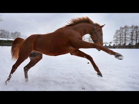 日本最強馬オルフェーヴル 午年...