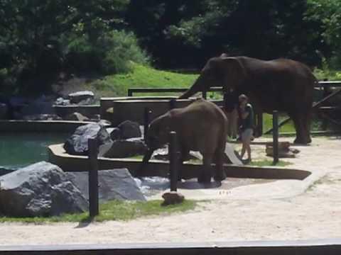 PBS Kids Shoot At The Maryland Zoo