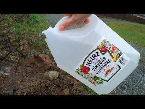 Use Vinegar on your Garden and Be Amazed What Happens