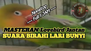 Download lagu Masteran lovebird jantan birahi bunyi full 1 jam nonstop