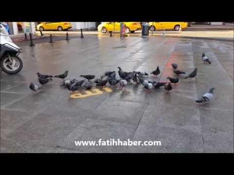 Allah kelamı ve Güvercinler