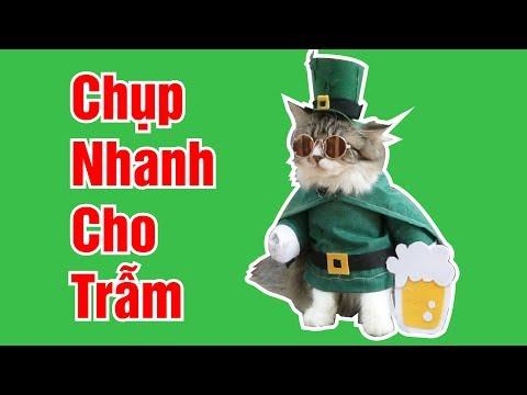 Cho mèo Molly dễ thương mặc áo Lễ Hội Bia chụp ảnh xem nhé | Nhà nuôi mèo