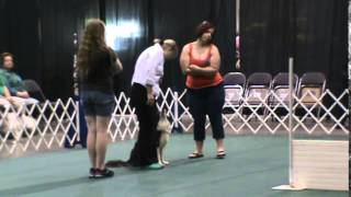 Shamrock - Open A Obedience 7.5.2014 - First Place