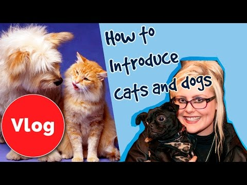 how-to-introduce-a-dog-to-a-cat!-plus-competition!