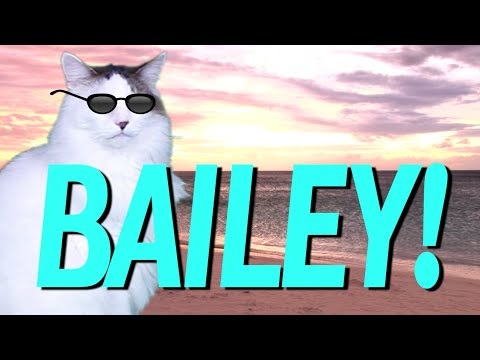 Happy Birthday Bailey Epic Cat Happy Birthday Song