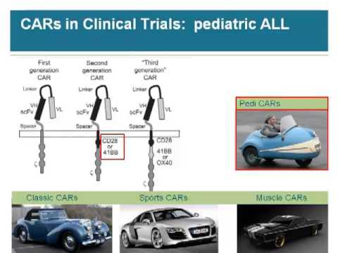 Engineered T Cell with CARs and TCRs for Hematologic Malignancy