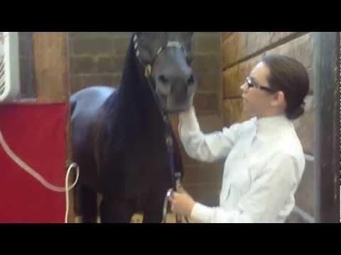 Как трахаются женщины с лошадьми