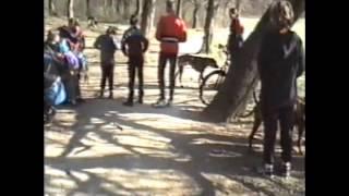 Bikejöring és Canicross sportágnépszerűsítés MCSE 2002