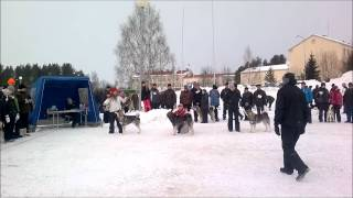Paras uros -kehä Kemijärvi 31.3.2012