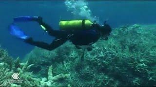 Australia: Grande barriera corallina impallidisce a ritmi record