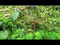 A Lot Of Wild Fruits, Wild Food: Survival Alone In The Rainforest | EP.85