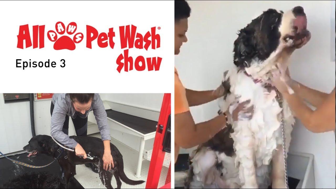 Self-Serve Pet Wash Videos   All Paws Pet Wash