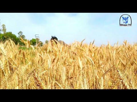 ਪਾਣੀ  ਪਿੱਛੇ   ਲਡ ਪਏ ਜੱਟ (shareek) Ghagga TV