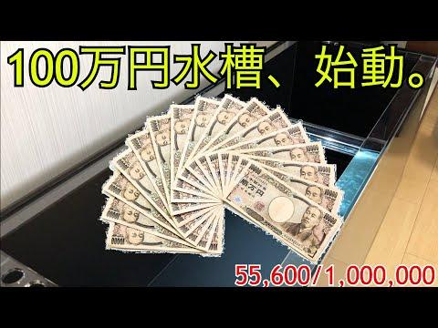 金魚で100万円!? 〜100万円水槽プロジェクト、始動〜