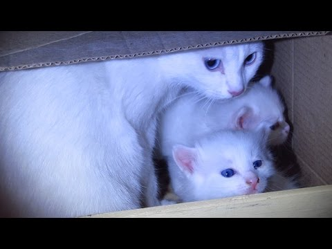 White cat with kittens now lives in a box next to the elevator