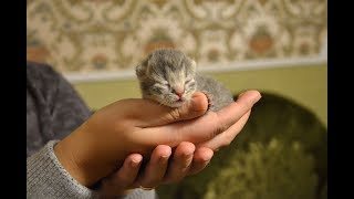 Наши котята ♥♥♥ !
