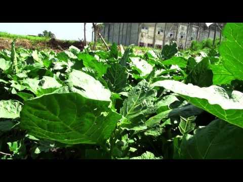 DOCUMENTARY: Urban Agriculture In Ghana